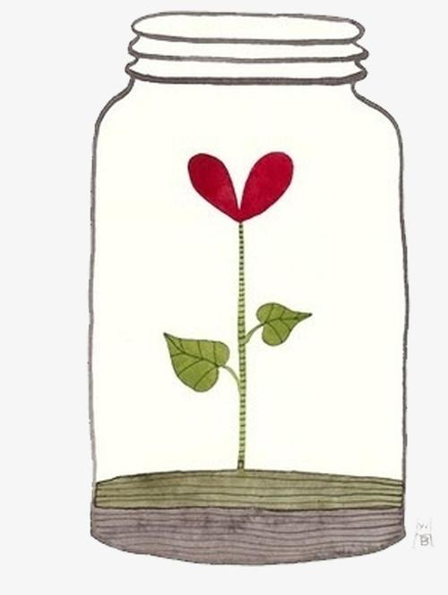 温室的花朵