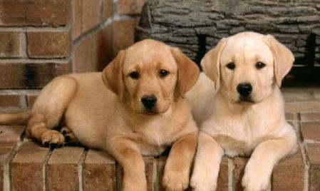 不咬人的狗狗是什么狗,什么狗狗比较好 第2张